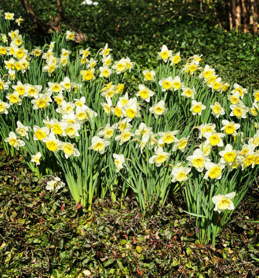 Spring blooms at a social distance